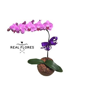 1290 Orquídea roxa