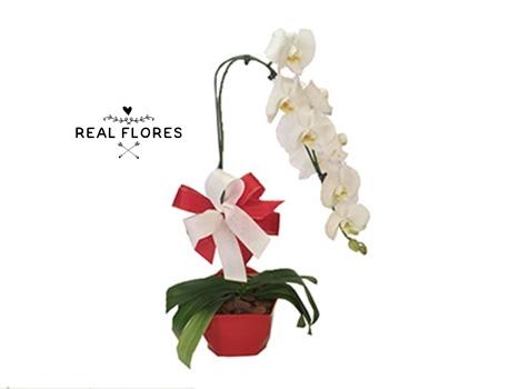 1396 Orquídea branca