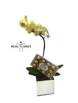 1444 Orquídea + Ferrero