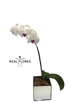 1446 Orquídea branca em cachepô