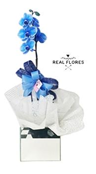 1455 Blue Orquídea