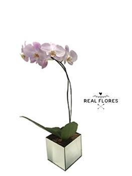 1494 Orquídea rosa